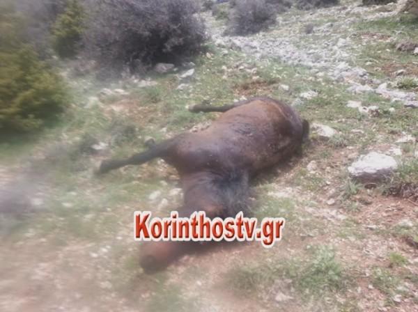 αλογα νεκρα Κορινθος