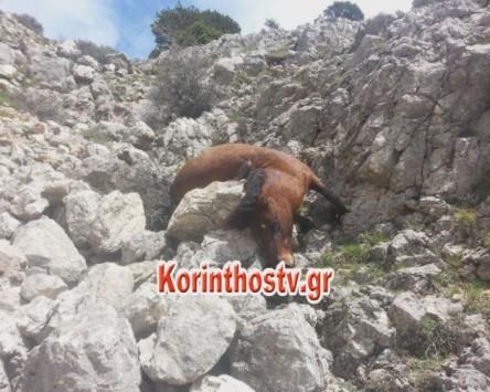 Σκότωσαν με πυροβόλο όπλο 8 άγρια άλογα (ΦΩΤΟ)