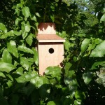 Φωλιές για τα πουλιά στον Πηνειό