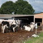 Μπλοκάρονται πληρωμές αποζημιώσεων σε Θεσσαλούς κτηνοτρόφους
