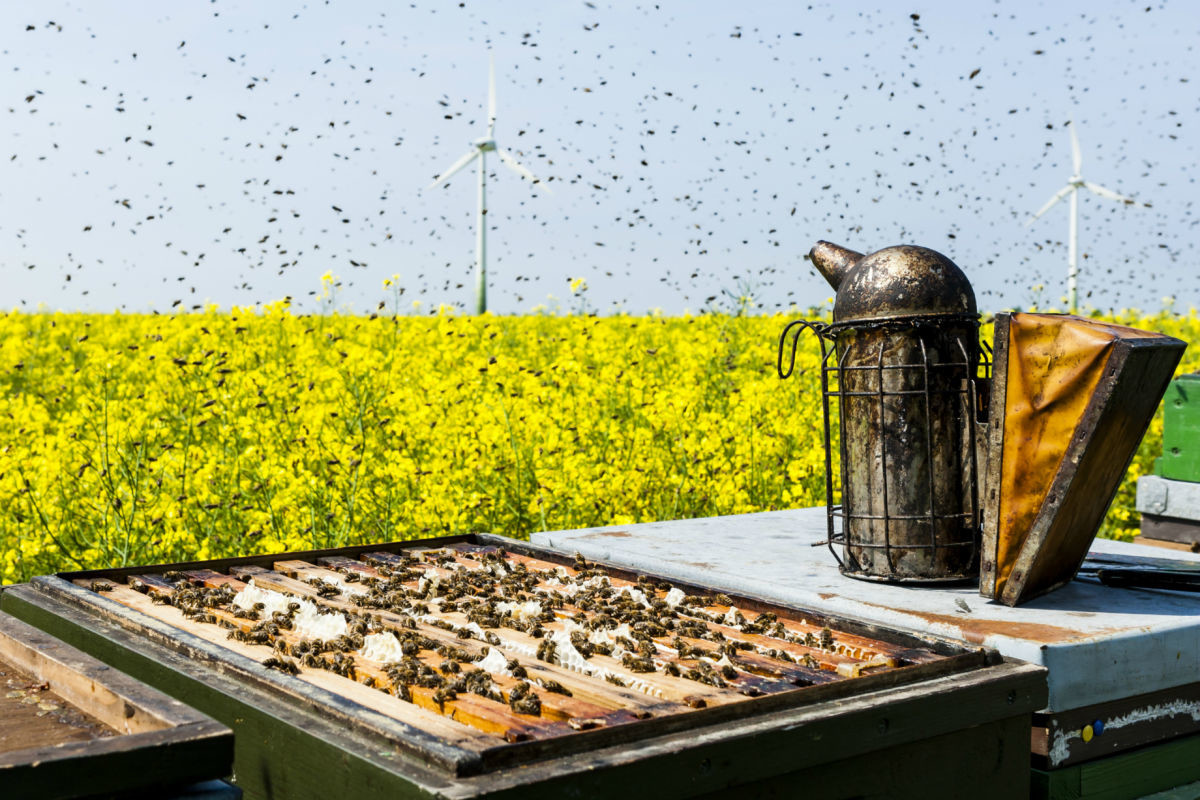 Τραγωδία στην Εύβοια: Πέθανε από τσιμπήματα μελισσών που απελευθερώθηκαν μετά από τροχαίο