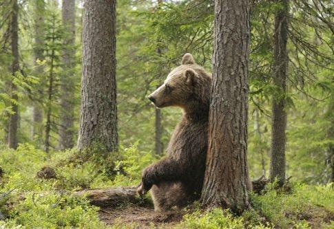 Ξύπνησαν… νωρίς οι αρκούδες