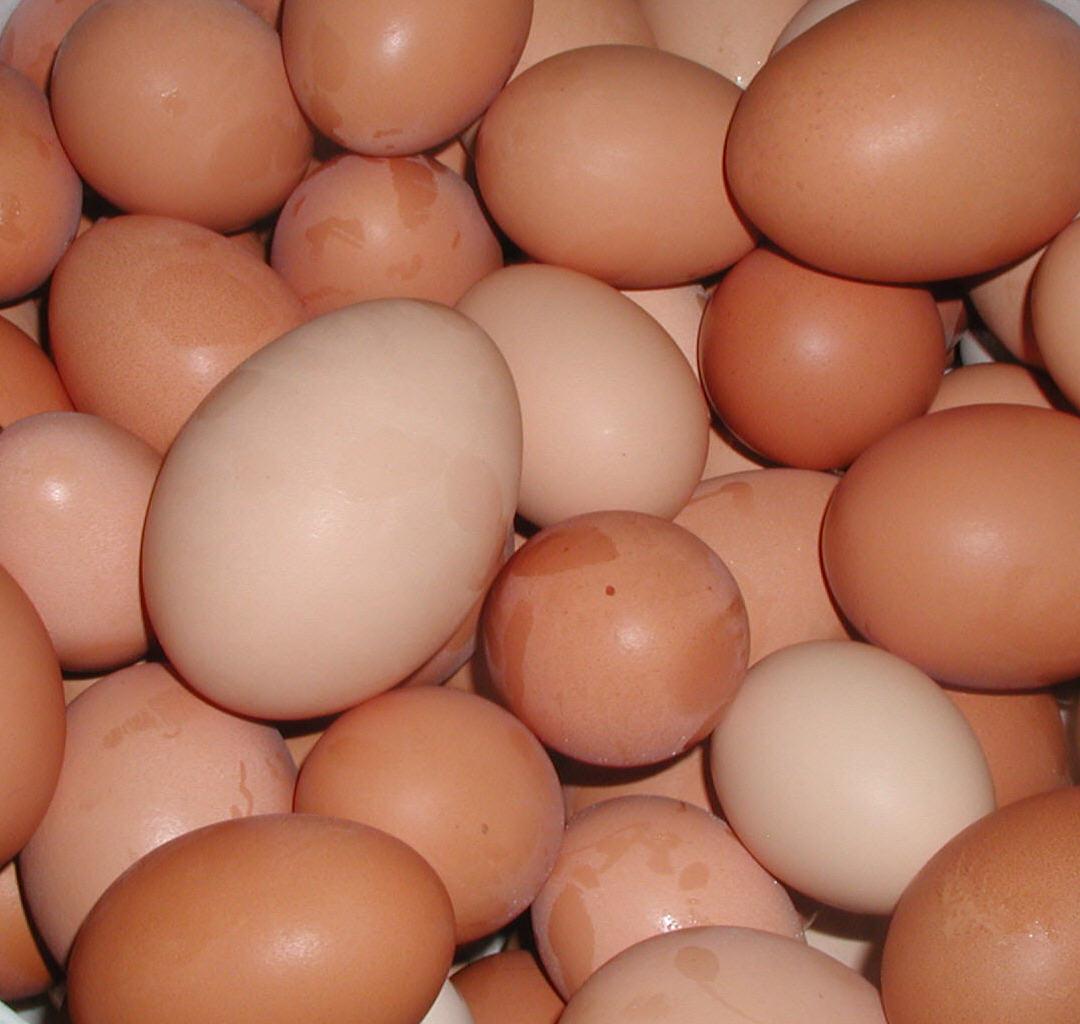 Καθησυχάζουν από τον ΕΦΕΤ για τα εγχώρια αυγά
