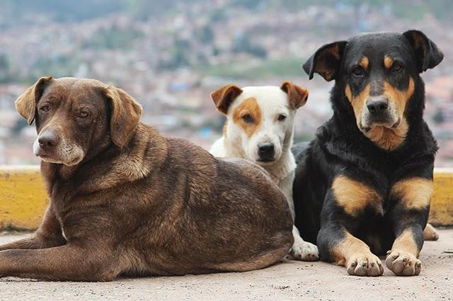 Επίθεση σκυλιών σε γυναίκα στα παράλια