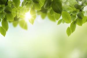 Φωτοσύνθεση: η επόμενη πηγή παραγωγής καθαρής ενέργειας