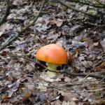 Εκπαίδευση ενόψει της φθινοπωρινής καρποφορίας μανιταριών