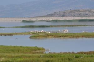 Τι δείχνουν οι εργαστηριακές αναλύσεις για τα νερά της Κάρλας