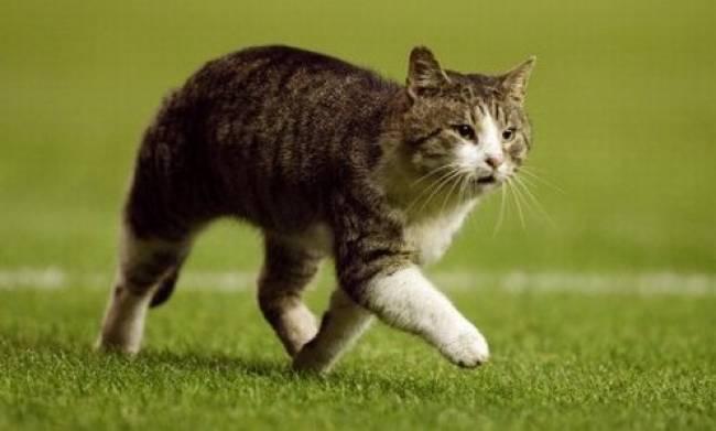 Οι επιστήμονες εξηγούν γιατί οι γάτες παρατείνουν την ζωή μας