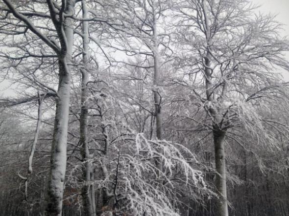 Δέκα εκατοστά το χιόνι στο Πήλιο