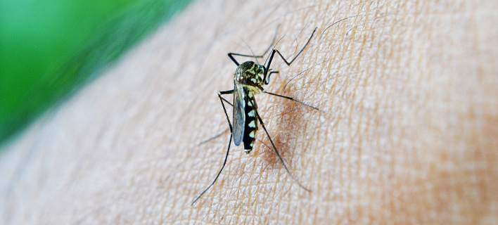 Πως να προστατευτείτε από τα κουνούπια