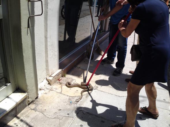 Απίστευτο: Φίδι έκανε ανενόχλητο την βόλτα του στην πλατεία Ταχυδρομείου στο κέντρο της Λάρισας (VIDEO)