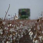 Ανακοίνωση προς βαμβακοπαραγωγούς ενόψει της αναμονής της φετινής περιόδου συγκομιδής