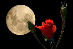 Παρανάλωμα έρωτα σε έναστρους ουρανούς… Tου Βαγγέλη Κουρτεσιώτη