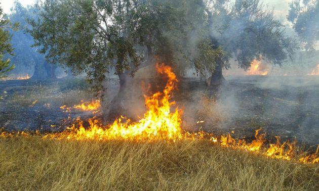 42 δασικές πυρκαγιές σε ένα 24ωρο