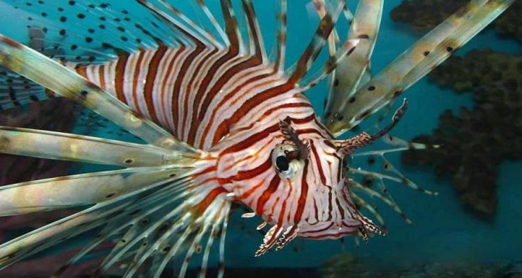 Τοξικά ψάρια! Συναγερμός στο Αιγαίο