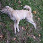 Δηλητηριάζουν σκυλιά στη Νέα Πολιτεία