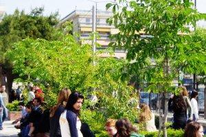 Τα δέντρα που ζουν στις πόλεις αναπτύσσονται γρηγορότερα