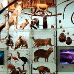 Θα «εξαφανίσει» 1 στα 6 είδη του πλανήτη