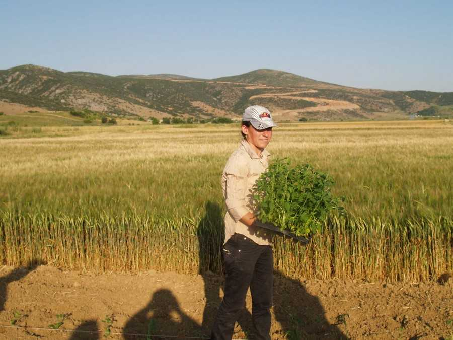 Η προκήρυξη για την βιολογική γεωργία και κτηνοτροφία