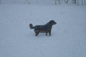 Απτόητος στο παιχνίδι με το χιόνι (ΦΩΤΟ)