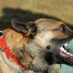 Σοβαρός τραυματισμός ηλικιωμένης ύστερα από επίθεση σκύλων
