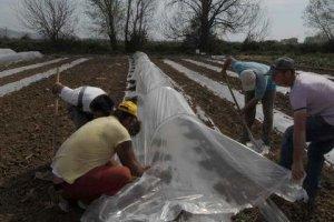Διαγραφές – εξπρές για τα «κόκκινα» δάνεια των αγροτών