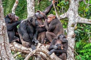 Χιμπατζήδες η νέα μόδα !