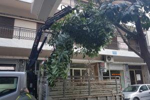 Συνεχίζεται η «επιχείρηση κλάδεμα» στη Λάρισα (ΦΩΤΟ)