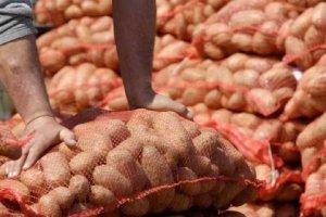 «Πατάτα-δηλητήριο» από τον Νείλο