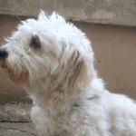 Φυλάκιση ενός έτους σε συνταξιούχο για κακοποίηση σκύλου