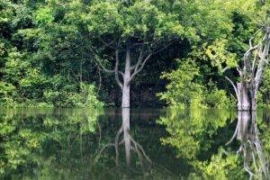 Έρευνα: 9.600 είδη δέντρων απειλούνται με εξαφάνιση