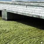 «Πράσινη» λιμνοθάλασσα