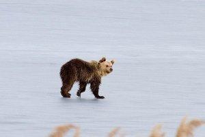 Εμφανίστηκε αρκουδάκι στο Νεραϊδοχώρι…
