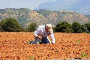 Τι αλλάζει σε ασφάλιση – συνταξιοδότηση για τους αγρότες