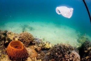 Οι θάλασσές μας έχουν μετατραπεί στη μεγαλύτερη χωματερή του κόσμου