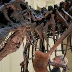 Ο τυραννόσαυρος «δάγκωνε με το βάρος τριών αυτοκινήτων»