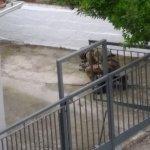 Λάρισα: Φοβούνται για τη ζωή τους στο σπίτι όπου βρέθηκε η χειροβομβίδα
