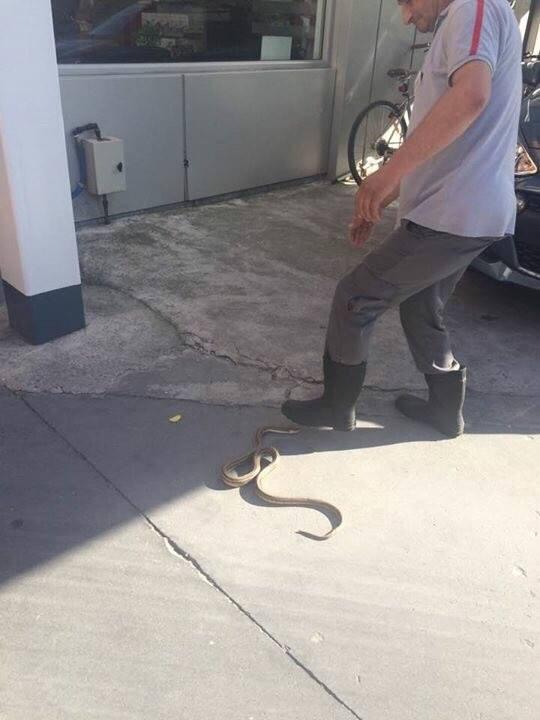 Γέμισε φίδια η Λάρισα - Δεύτερο περιστατικό μέσα σε λίγες ημέρες