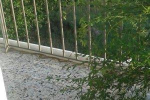 Φίδι σε μπαλκόνι 2ου ορόφου στα Φάρσαλα (ΦΩΤΟ)