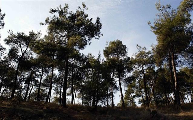 Περίπου 300 εκατ. για το Πρόγραμμα Αγροτικής Ανάπτυξης σε δασικού χαρακτήρα επεμβάσεις