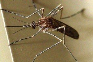 Εφαρμογή στο κινητό τηλέφωνο θα προειδοποιεί ότι πλησιάζει κουνούπι!