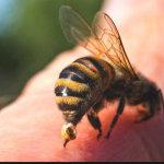 Τι πρέπει να κάνεις αν σε τσιμπήσει μέλισσα ή σφήκα