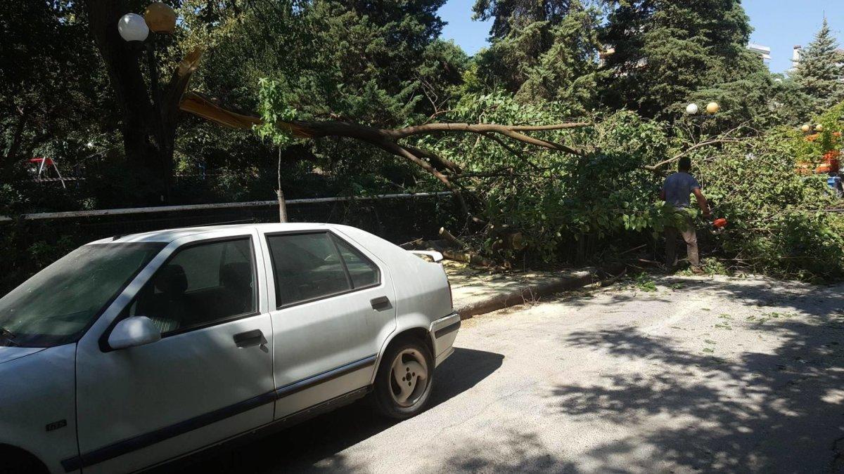 Δέντρο καταπλάκωσε 3 ΙΧ στο πάρκο Αγίου Αντωνίου στη Λάρισα