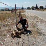 Δύο αρκούδες νεκρές μέσα σε λίγες ώρες σε σημείο «καρμανιόλα»
