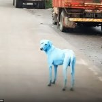 Σκύλοι αλλάζουν χρώμα!