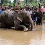 Ελέφαντες διέσωσαν 600 ανθρώπους από πλημμύρες στο Νεπάλ