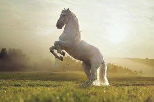 Ο Κωνσταντίνος και το άλογο… Του Άκυ Μητσούλη