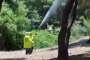 Ψεκασμοί κατά του δάκου σε ελαιοκτήματα της Π.Ε. Λάρισας