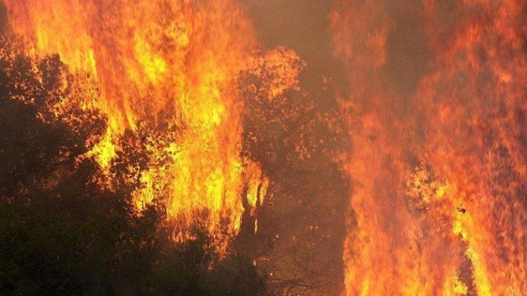 Μεγάλη πυρκαγιά στην Ηλεία: Οι άνεμοι την «σπρώχνουν» προς την αρχαία Ολυμπία