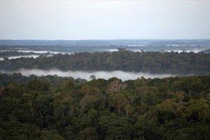 381 νέα είδη ανακαλύφθηκαν στο τροπικό δάσος του Αμαζονίου